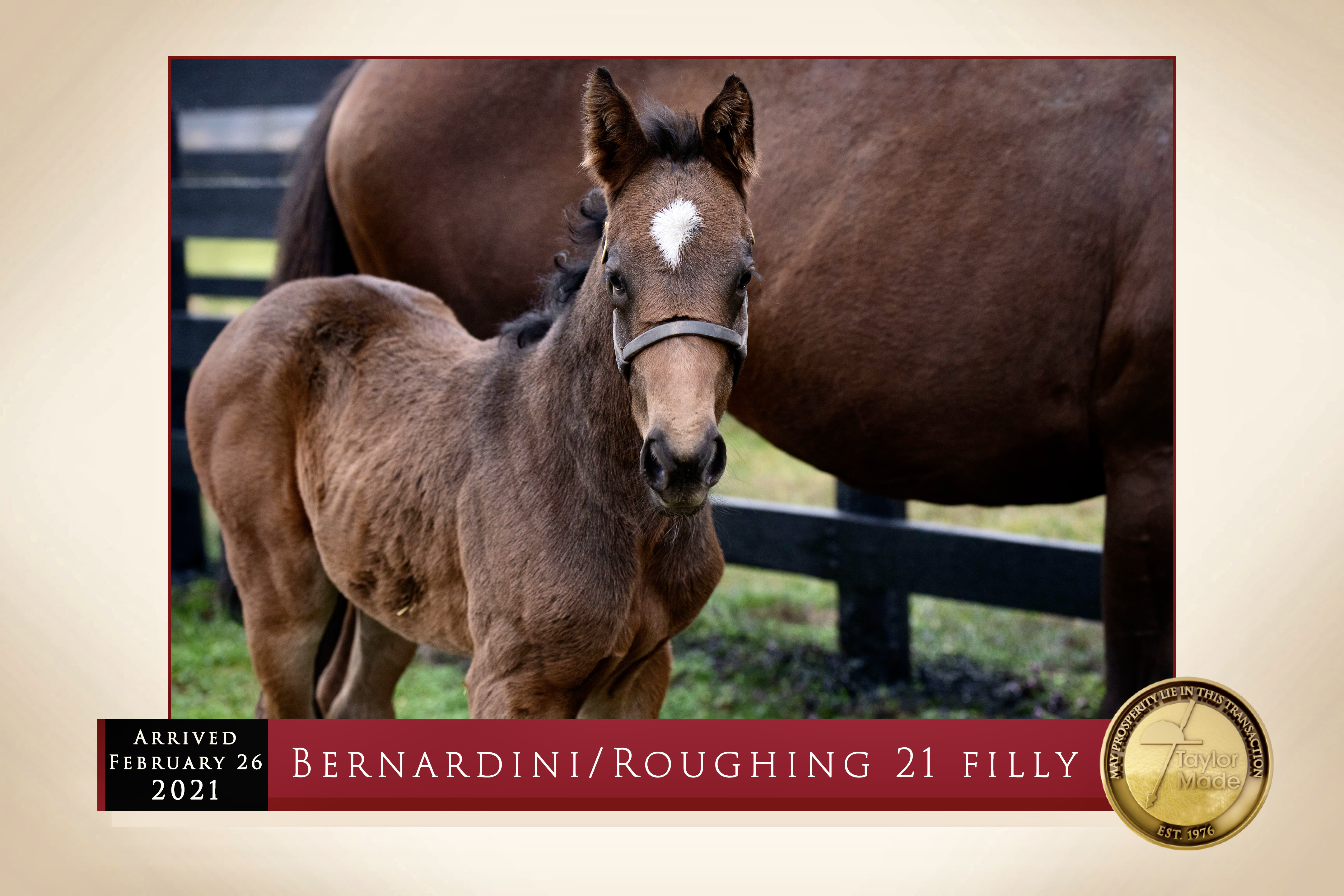 Bernardini - Roughing 2021 filly arrived February 26th.